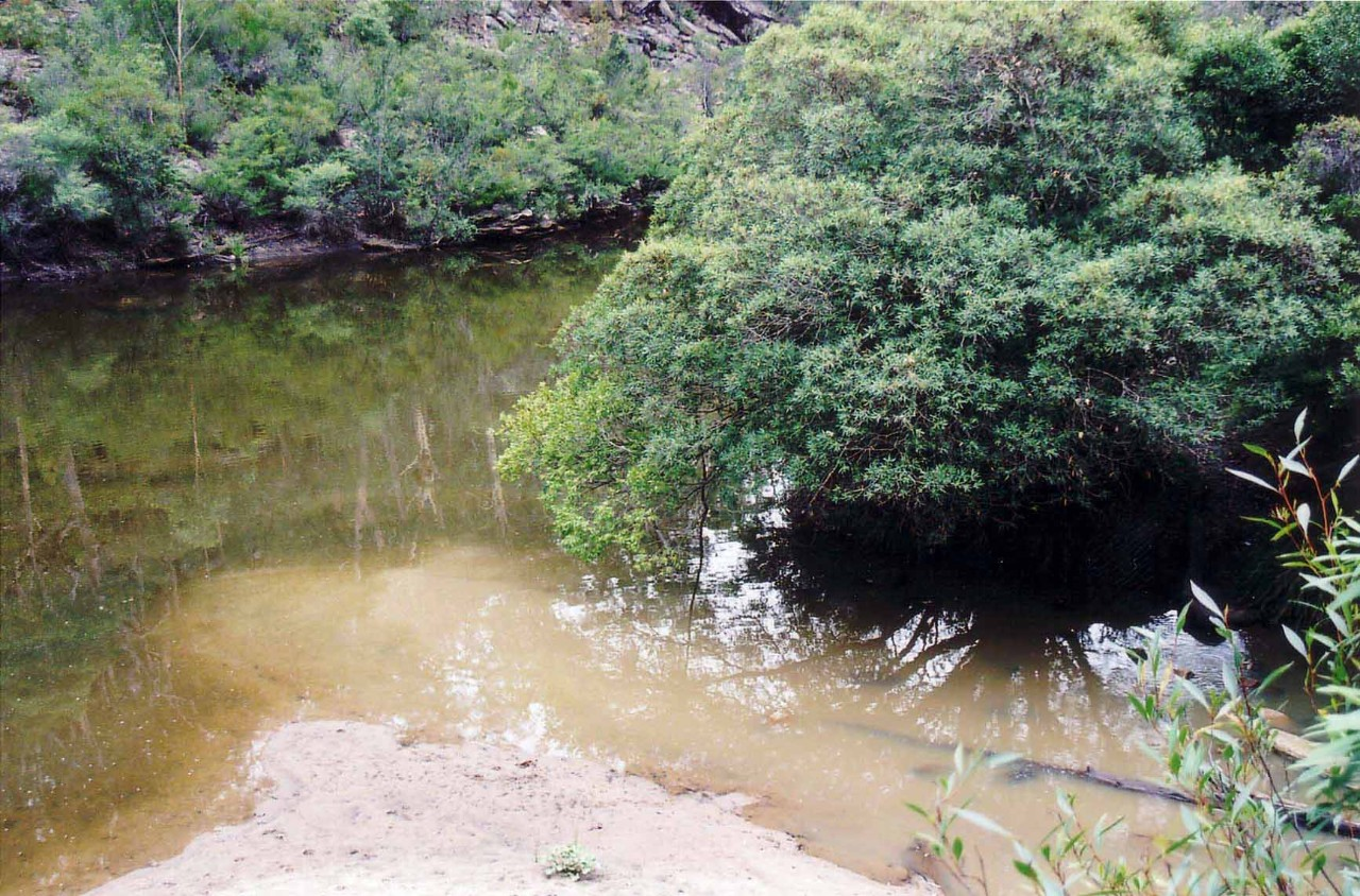 A creek in Airds, Sydney.